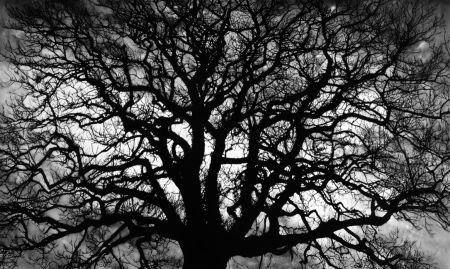 Multiple Longo - Untitled (Tree)