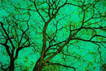 Photography Bohorquez - Verde