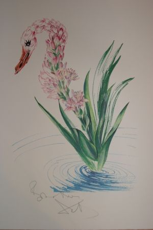 Lithograph Dali - Water-Hybiscus Swan (surrealistic flowers)