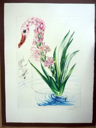 Etching Dali - Water Hibiscus Plus Swan (Florals)