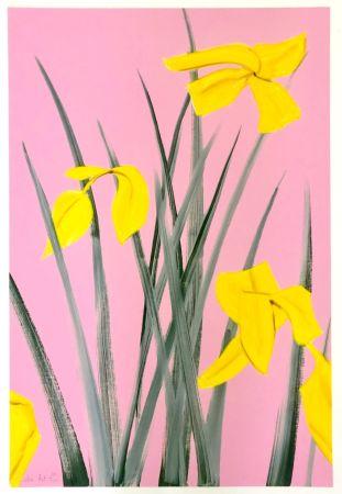 Etching Katz - Yellow Flags 3